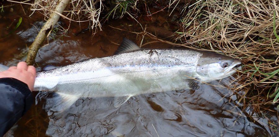 northesk rivernorthesk scotland skotlanti skottland salmon laks lax lohi perhokalastus flyfishing flugfiske fluefiske kalastus kalastusmatka fishmaster globalfishing
