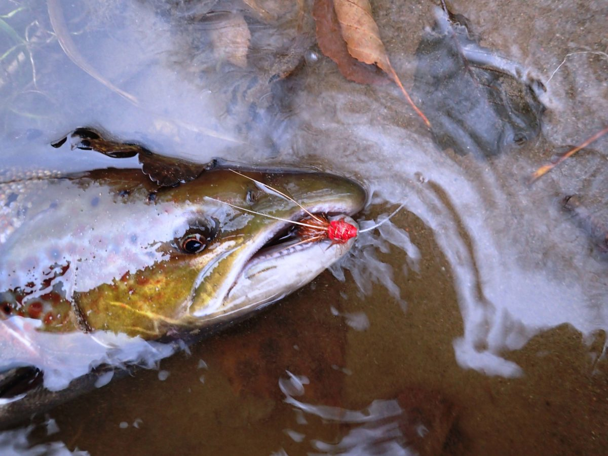tweed rivertweed tweedjoki scotland skotlanti skottland salmon laks lax lohi perhokalastus flyfishing flugfiske fluefiske perhokalastusmatka salmonflyfishing kalastus lohenkalastus perhokalastusmatka kalastusmatka fishmaster globalfishing