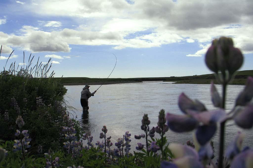 eastranga iceland island islanti salmon laks lax lohi perhokalastus flyfishing flugfiske fluefiske salmonflyfishing perhokalastusmatka kalastus kalastusmatka fishmaster globalfishing