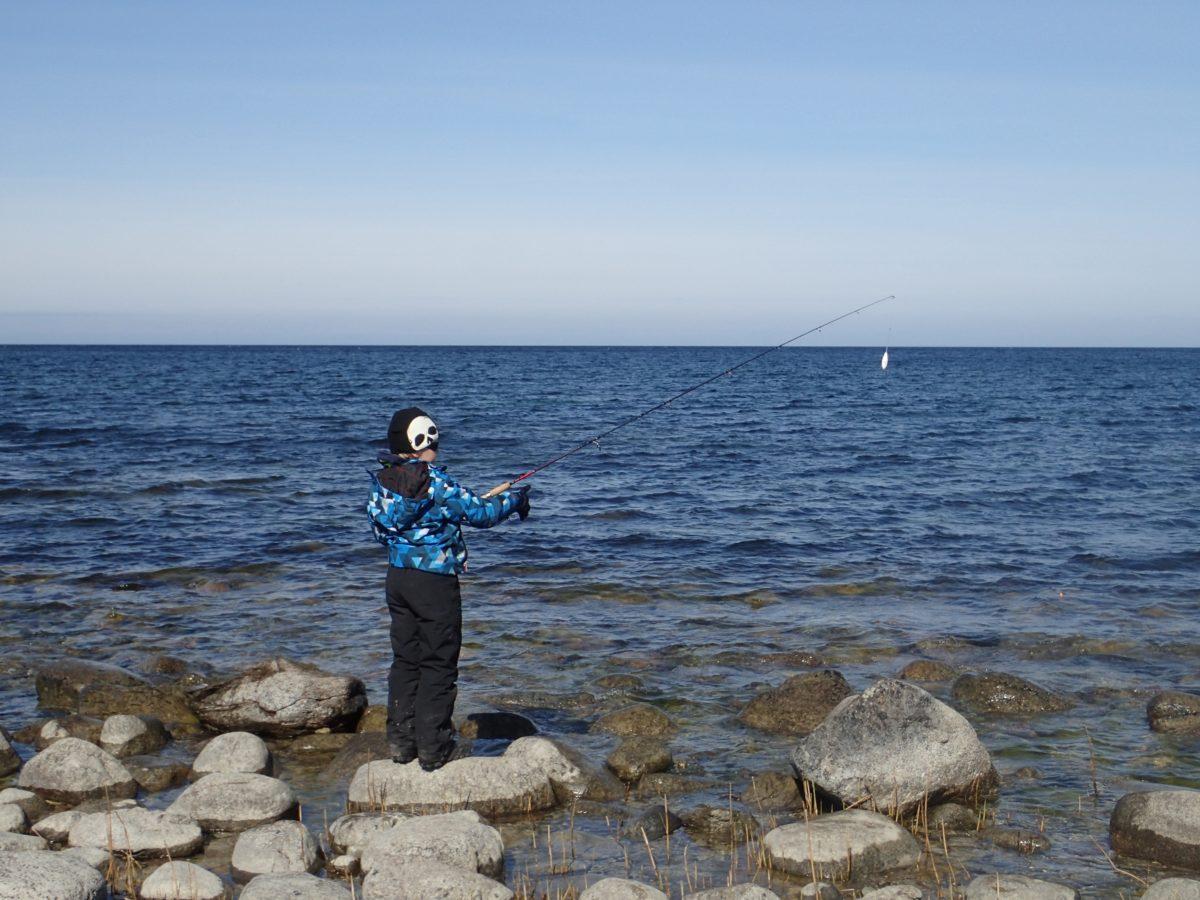 gotlanti meritaimen perhokalastus heittokalastus kalastus kalastusmatka