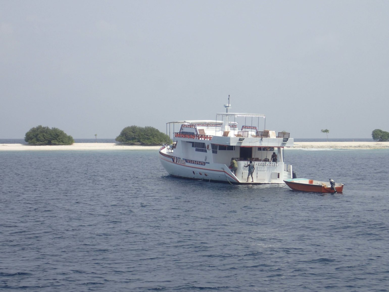 malediivit maldiverna maldives gt gianttrevally bluefintrevally perhokalastus heittokalastus spinfishing spinnfiske flyfishing flugfiske fluefiske perhokalastusmatka kalastus kalastusmatka kalastusmatkat fishmaster globalfishing