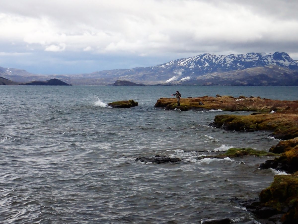 thingvallavatn iceland island islanti trout browntrout taimen öring perhokalastus flyfishing flugfiske fluefiske perhokalastusmatka kalastus kalastusmatka fishmaster globalfishing