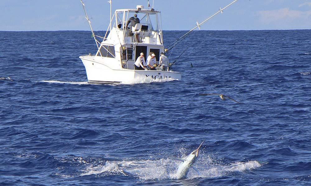 azorit azorena azores biggame biggamefishing marlin bluemarlin vetouistelu trolling kalastus kalastusmatka fishmaster globalfishing