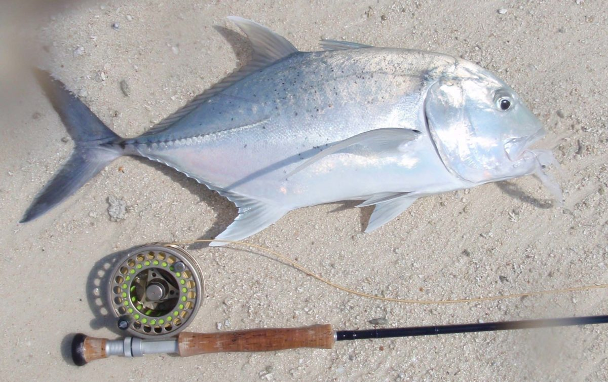 malediivit maldives maldiverna perhokalastus flyfishing flugfiske gt gianttrevally bluefintrevally