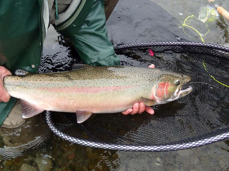 usa olympicpeninsula washington bogachiel hoh steelhead perhokalastus flyfishing flugfiske fluefiske perhokalastusmatka kalastus kalastusmatka fishmaster globalfishing
